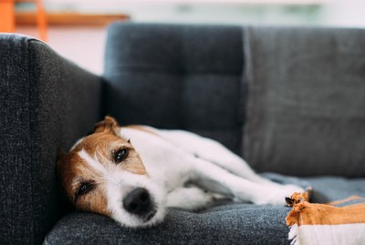 How Can I Help My Grieving Dog Feel Better?