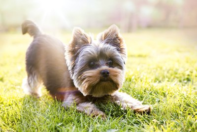 240 Popular Names For Small Dogs