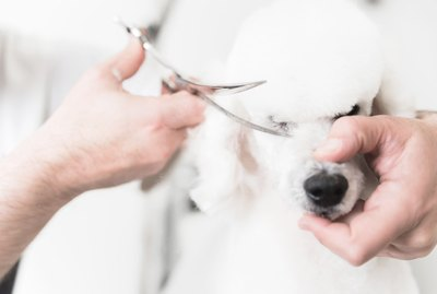 Should I Give My Dog a Summer Cut?