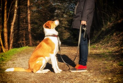 Are All Dogs Trainable?