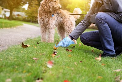 Why Does My Dog Take So Long To Poop On Walks?