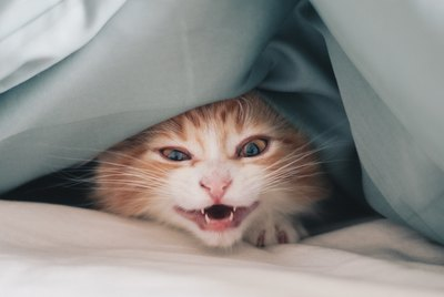 Why Does My Cat Wake Me Up in the Middle of the Night?