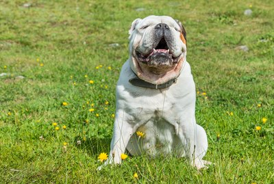 How to Detect Hot Spots on Your Dog