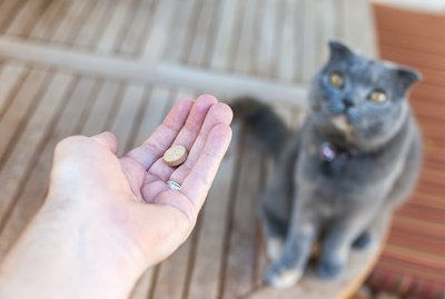 Tips For Giving Pills to Your Cat