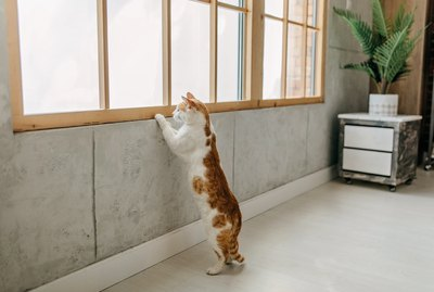 Why Do Cats Chirp?