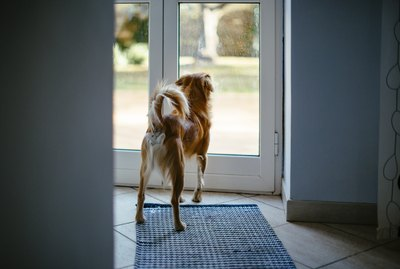 Why Does My Dog Run Out The Front Door?