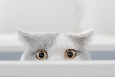 Why Are Cats So Curious?