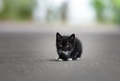 What to Do if You Find a Stray Kitten