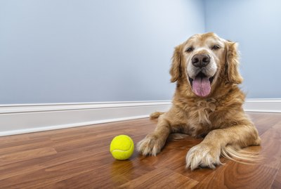 Symptoms & Treatment of Diabetes in Dogs