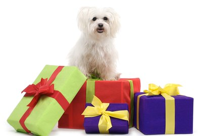 11 Gift Ideas For Your Dog That Will Challenge Their Brain