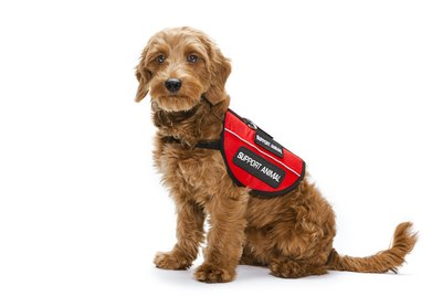 What's the Difference Between Service Dogs, Therapy Dogs & Emotional Support Dogs?