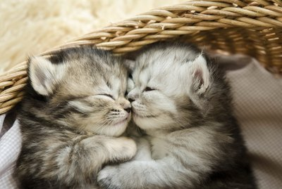 12 Animals Who Are So In Love That We Can't Handle It