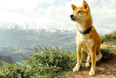 How Do High Altitudes Affect Dogs?