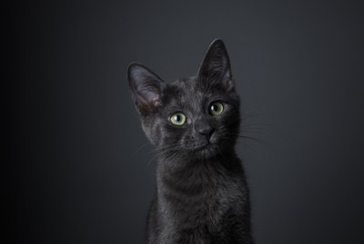 These 500 Unique and Creative Names for Black Cats Are Perfect for Pretty Kitties
