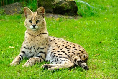 Here Are 9 Exotic Pets That Are Actually Legal To Own