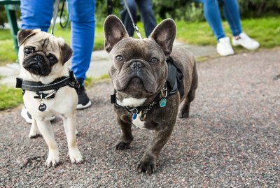 6 Tips For Practicing Social Distancing When You Walk Your Dog