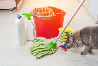 Is Mr. Clean Safe For Pets?