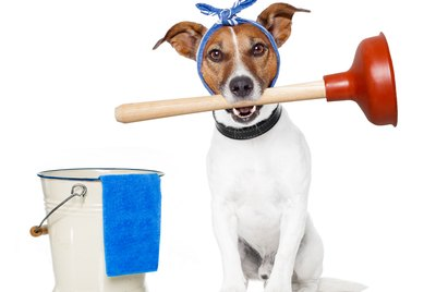 Spring Cleaning Guide To Keeping Homes Free Of Pet Pee, Smells & Hair