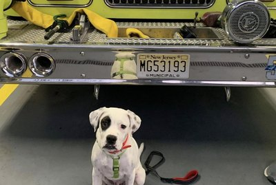 16 Dogs Being Extra Good at Fire Stations