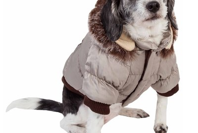 8 Must-Have Cold Weather Products For Dogs