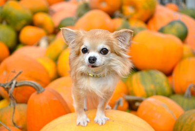 15 Pumpkintastic Pets at Pumpkin Patches