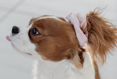 16 Dogs With The Cutest Ponytails