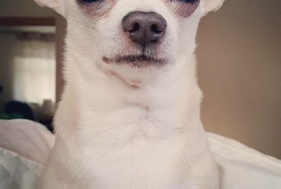 The Very Best of the Disapproving Dog Challenge