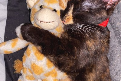 15 Cats Cuddling With Their Favorite Stuffed Animals