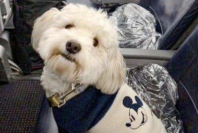 15 Dogs Who Love To Fly