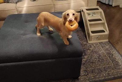 The Very Best of the Guilty Dog Challenge