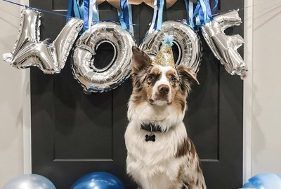 16 Dogs Celebrating Their Very First Birthdays