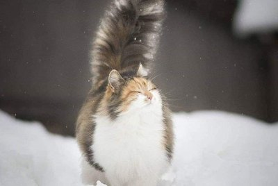 16 Cats With Gloriously Fluffy Tails