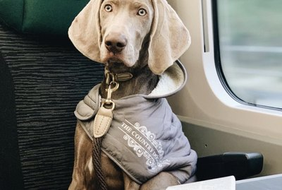 15 Dogs Riding on Trains