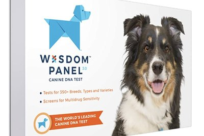 The Best Dog DNA Tests