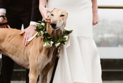 18 Dogs Stealing the Show at Weddings