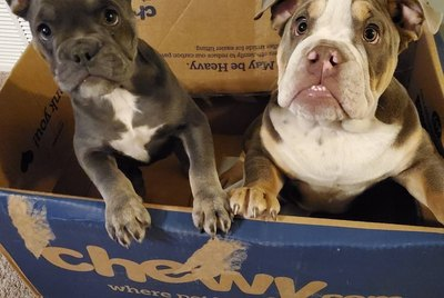 22 Dogs Who Are All About That Box Life