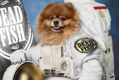 17 Dogs Who Are Ready For Space Travel
