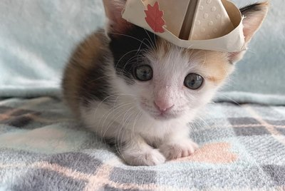 16 Cats & Kittens Looking Cute in Hats