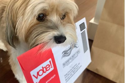 15 Pets Hitting the Polls