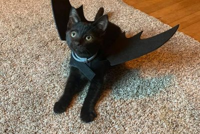 20 Black Cats Who Think Every Day is Halloween