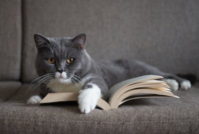 106 Literary Cat Names