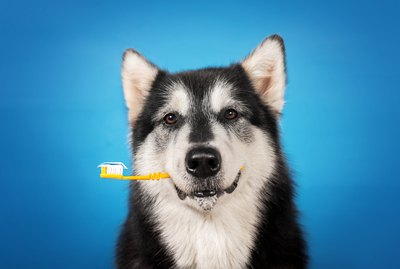 Veterinarians Say These Tips Are Essential to Dog Dental Hygiene