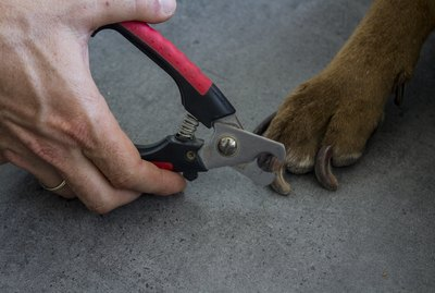 How to Pick the Best Dog Nail Clippers – According to a Dog Groomer