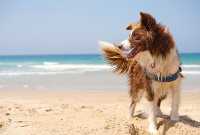 Heading to the Beach With Your Dog? Here are Our Top 5 Tips