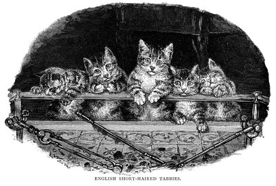 150 Victorian Cat Names For Your Cat