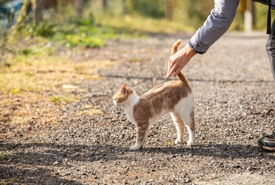 Why Do Cats Raise Their Backs When You Pet Them?