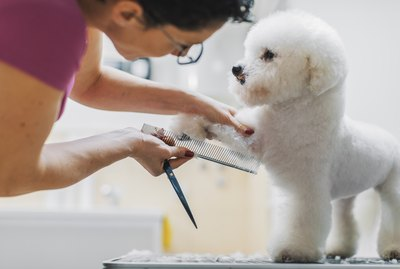The Best Grooming Products for Hypoallergenic Dogs – According to Vets