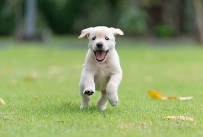 How Much Exercise Does a Puppy Need?