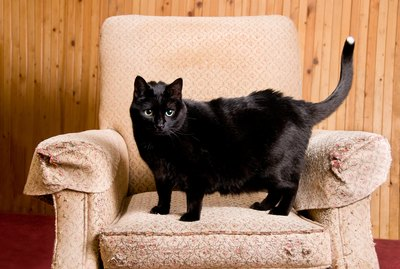 How to Keep Cats From Urinating on Furniture