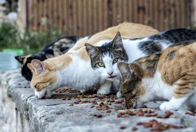 How To Care for Colony Cats